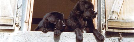 rencontre internationale chien terre neuve